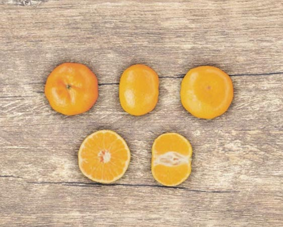 clementina-arrufatina 2