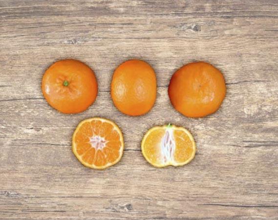 clementina-clemenules 2