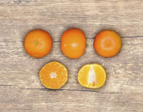 clementina-marisol 2