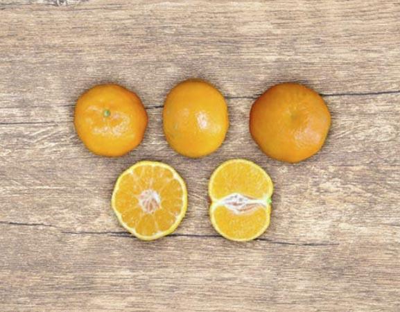 clementina-orogrande 2