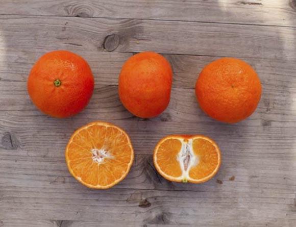 mandarina-clemenvilla 2