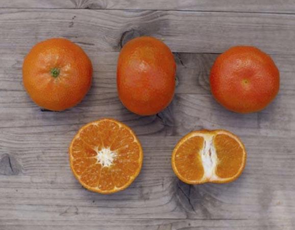 mandarina-nadorcott 2