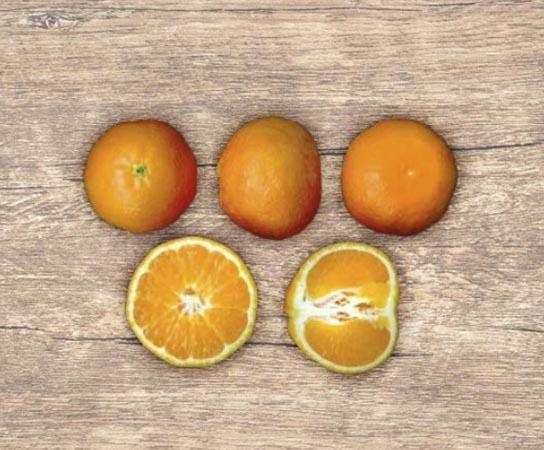 mandarina-safor 2