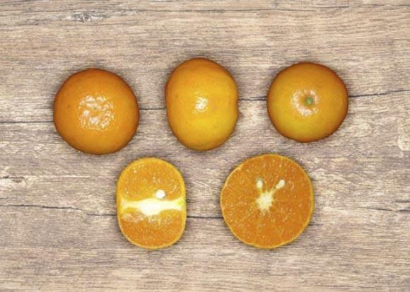 mandarina-spring sunshine 2