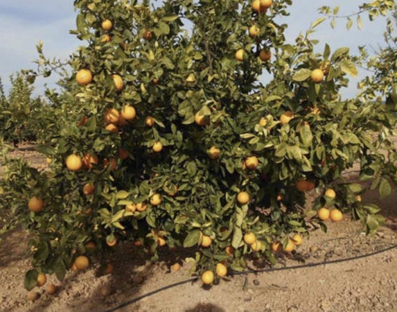 naranja-cambria 1