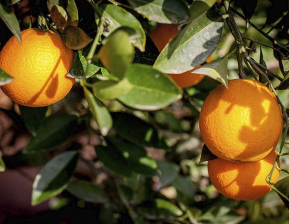 naranja-lane late 1
