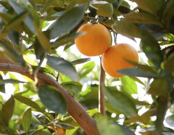 naranja-powell summer 1