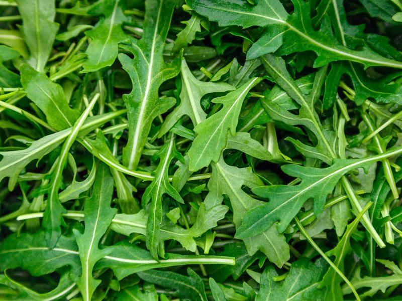 lots of fresh green arugula close up