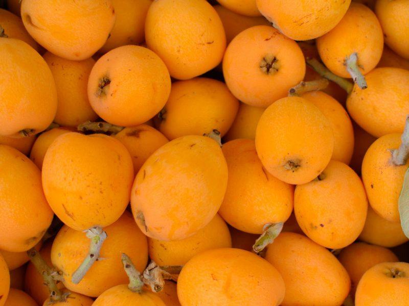 Loquat fruit or Japanese medlars. Also called as Nispero and Eriobotrya japonica. Close up.