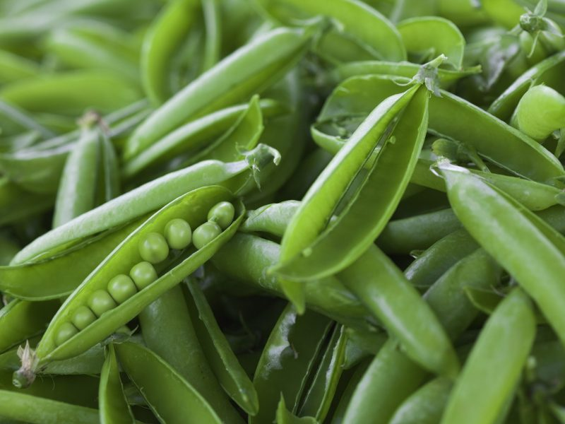 The last pod of peas waiting to be shelled.