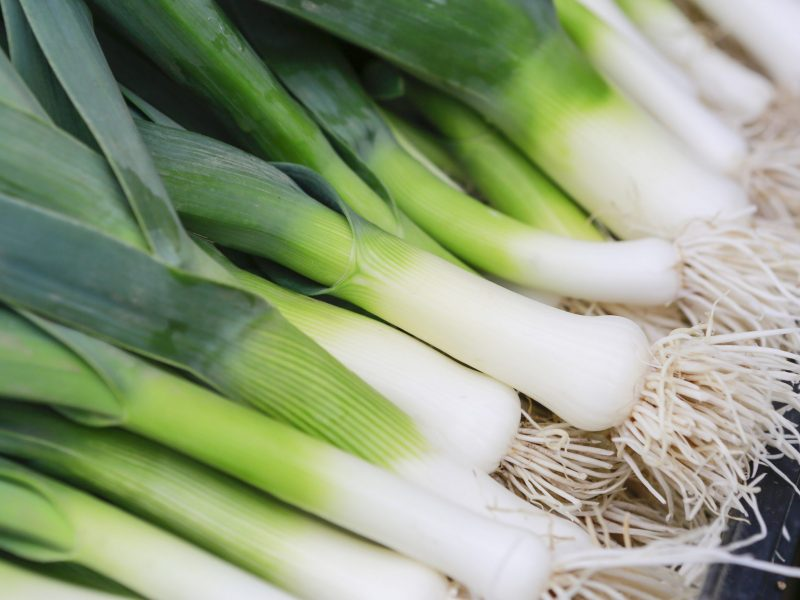Bundle of Fresh Leeks - Closeup of some fresh Leeks with the white bulb and roots